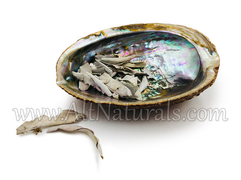 Pearlized Abalone Shell with 2 Ounces of Loose Sage Pieces 731717819233
