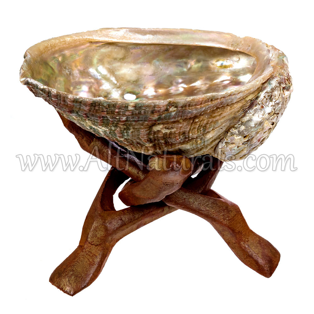 "4"" Mini Hand-selected Premium Abalone Shell with 4"" Wooden Cobra Stand"