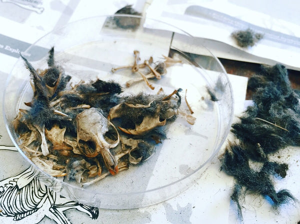 Owl Pellets - STEM Box Australia