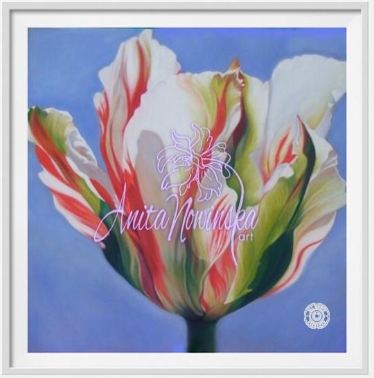 "6"" framed print of red, green & white variegated parrot tulip by anita nowinska"