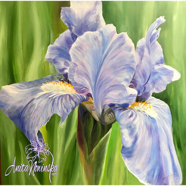Soft pale blue iris flowerpainting in oil on canvas by Anita Nowinska as part of the big flower paintings collection