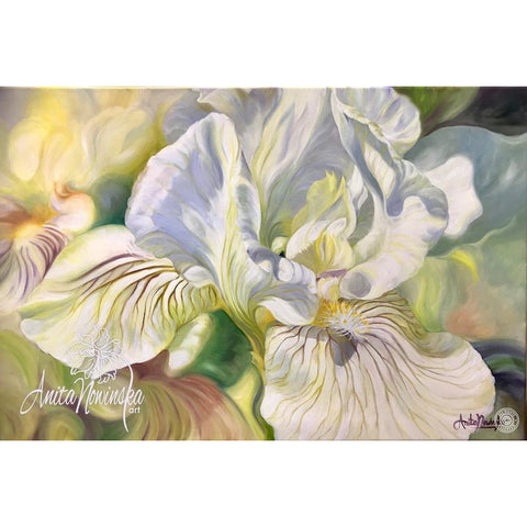 big Flower painting in oil on canvas of white & yellow iris by Anita Nowinska