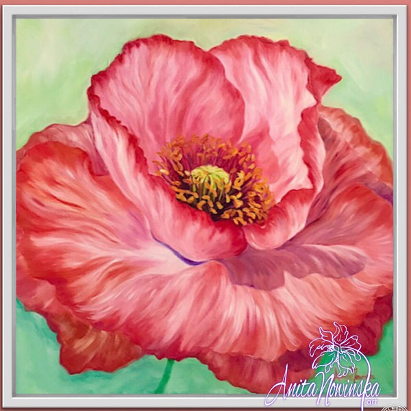 'Papaver- Coral Poppy Flower Painting