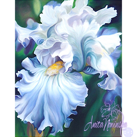 Romancer - Pale Blue Iris Flower Painting