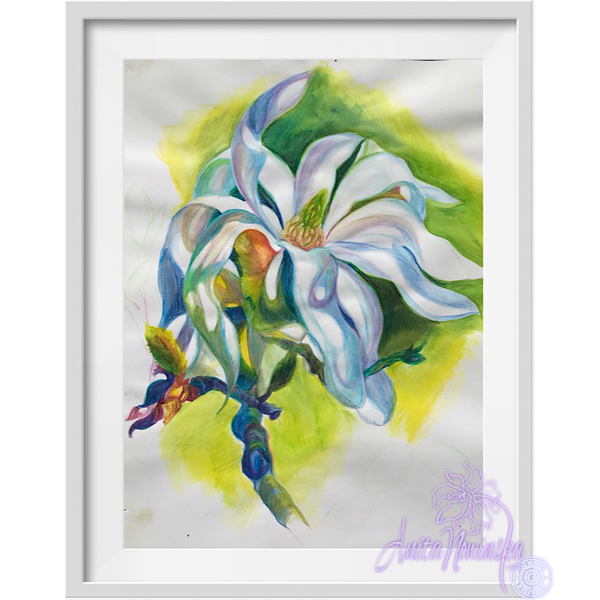 Magnolia flower drawing iv by Anita Nowinska.