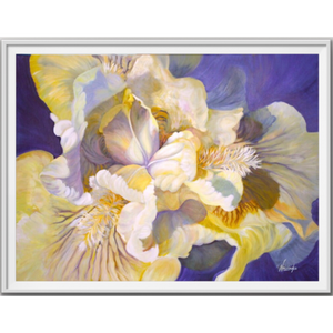 Oil on canvas flower painting of white & yellow Iris by Anita Nowinska