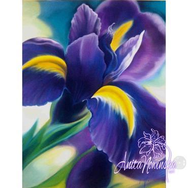 purple & yellow iris big flower painting by Anita Nowinska