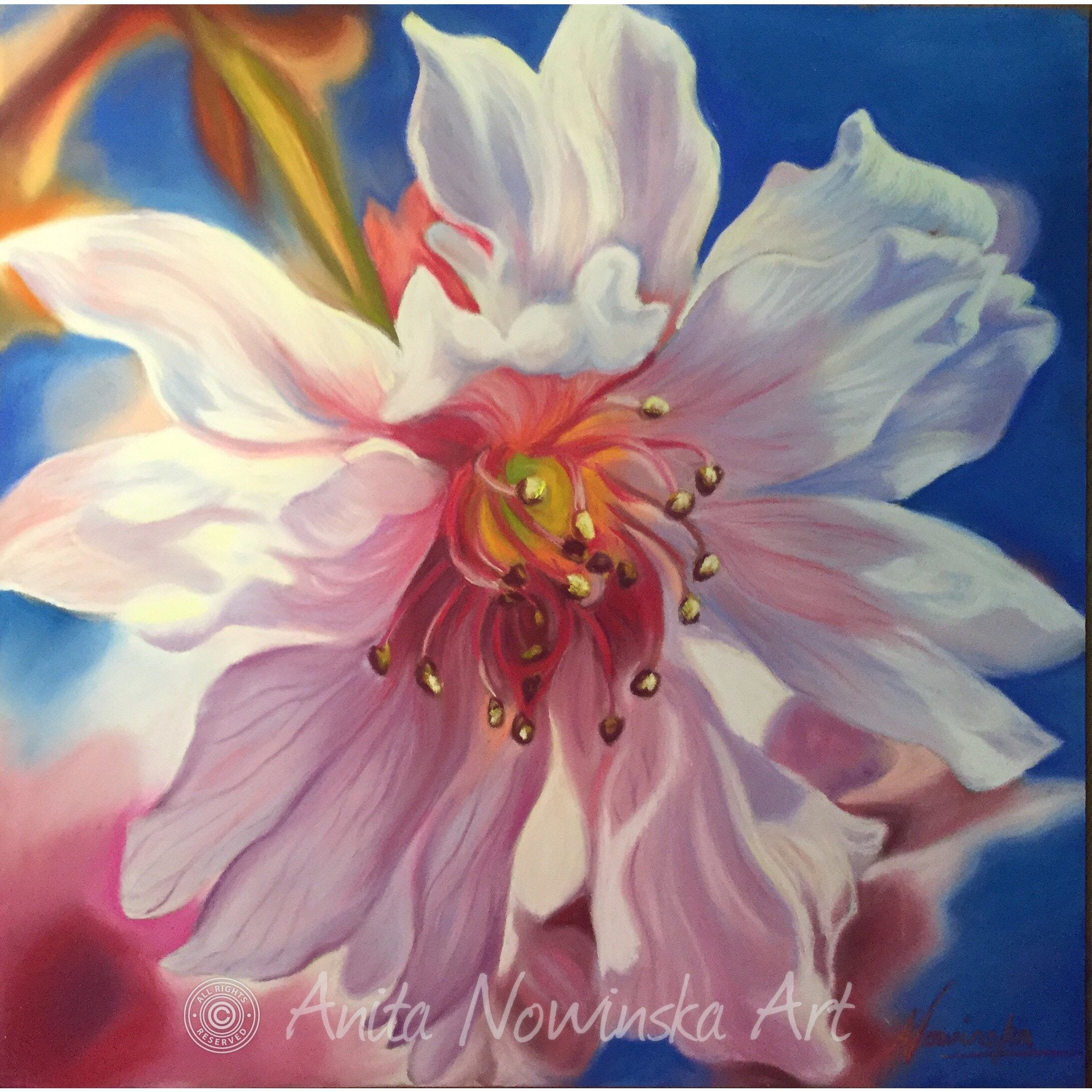 original pastel flower painting of pink cherry blossom by Anita nowinska