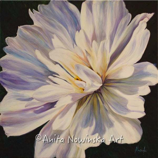 whisper- white dahlia - flower paintings- anita nowinska