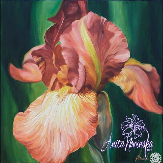 limited edition print of rusty peach iris flower painting by Anita Nowinska