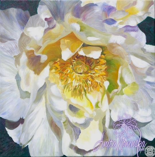 flower painting of white peony in oil on canvas by Anita Nowinska