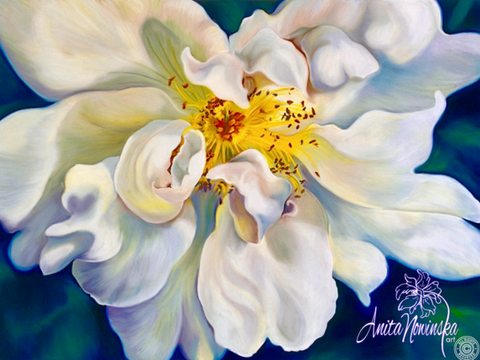 debutante- white briar rose flower painting by Anita Nowinska