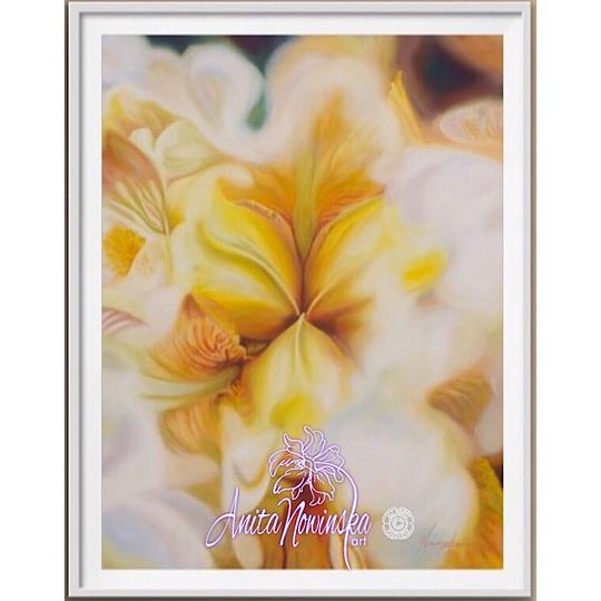 framed A3 print of yellow iris flower painting by Anita Nowinska
