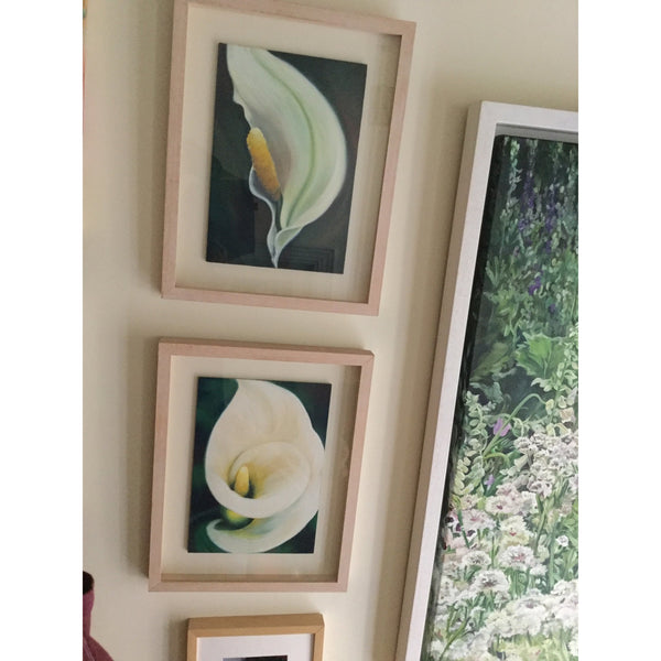 Fresh Linen - White Arum / Calla lily, Flower Painting