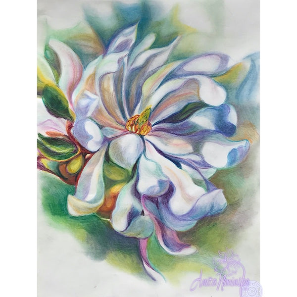 magnolia flower drawing by Anita Nowinska