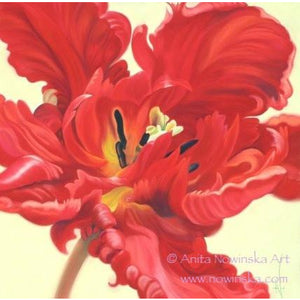 Pack of 4, 'Feelme' Art Greetings Cards- Pazzaz, Red Parrot Tulip