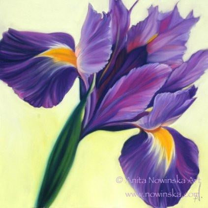 purple iris flower painting by anit anowinska