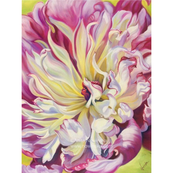 Scintillation- Limited edition print of pink & cream peony flower painting