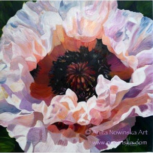 white, pink poppy flower painting by Anita Nowinska