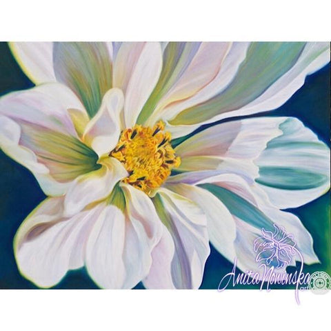 white cosmos flower painting by Anita Nowinska