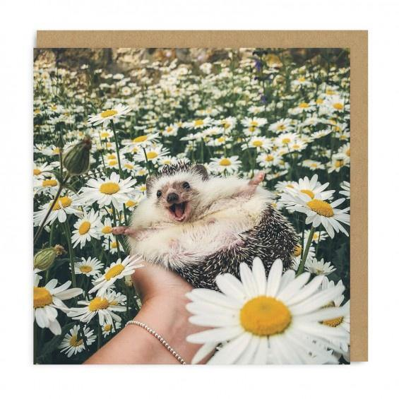 Hedgehog in a Daisy Field Card