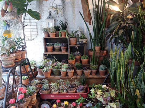 Green Fingers Market Specialty Store Recommendation Uncoverd City Guide www.uncoverd.world