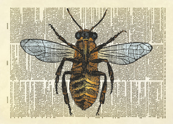 Honey Bee Dictionary Art Print