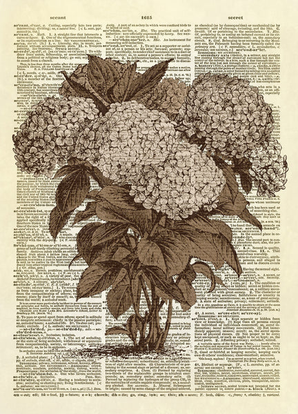 Hydrangea Flowers Dictionary Art Print