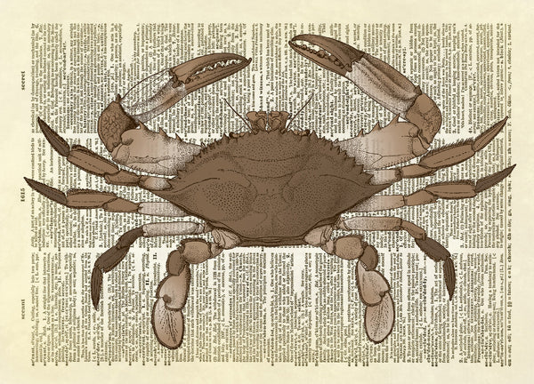 Maryland Blue Crab Dictionary Art Print