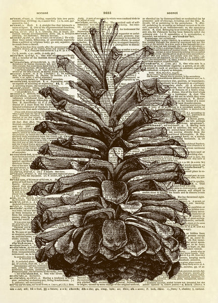 Pine Cone Dictionary Art Print