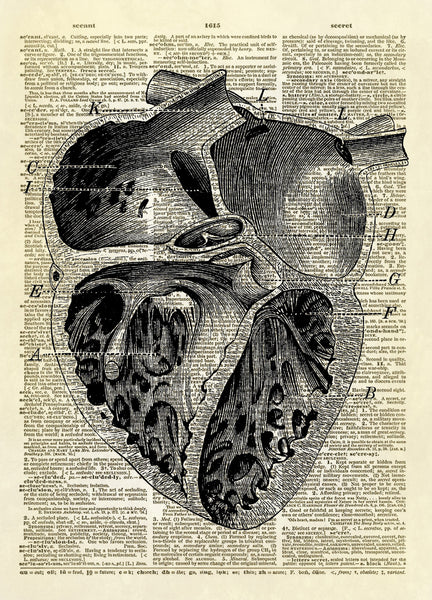 Human Heart Chambers Diagram Dictionary Art Print