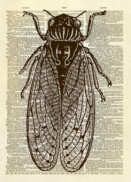 Cicada Insect Dictionary Art Print