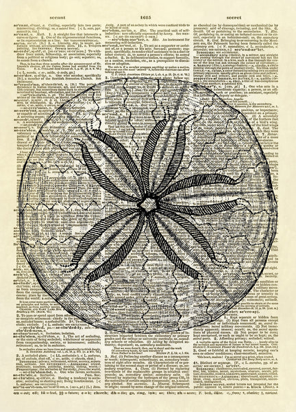 Sand Dollar Dictionary Art Print
