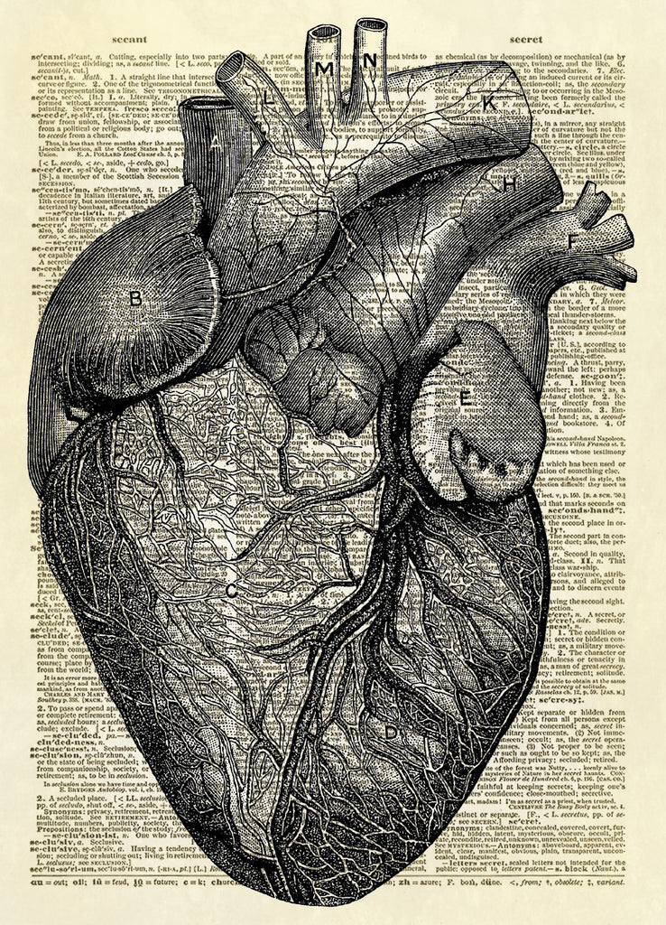 Human Heart Diagram Dictionary Art Print