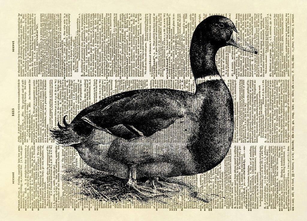 Mallard Duck Dictionary Art Print