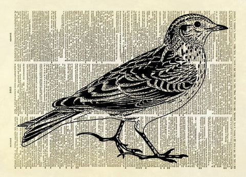 Skylark Bird Dictionary Art Print