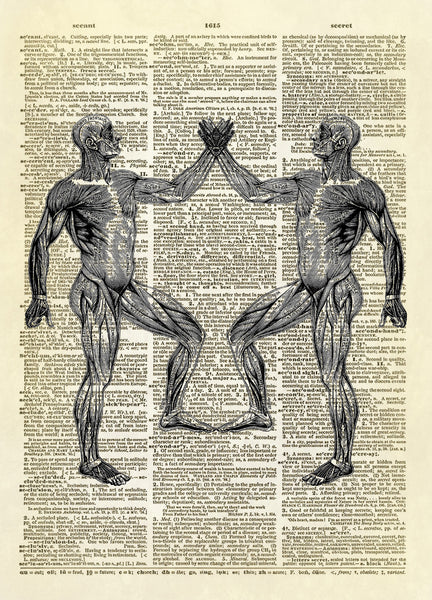 Anatomical Muscle Illustration Dictionary Art Print