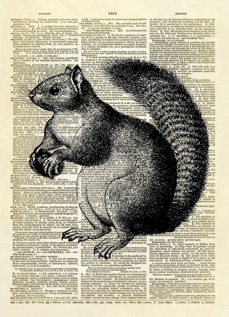 Furry Squirrel Animal Dictionary Art Print