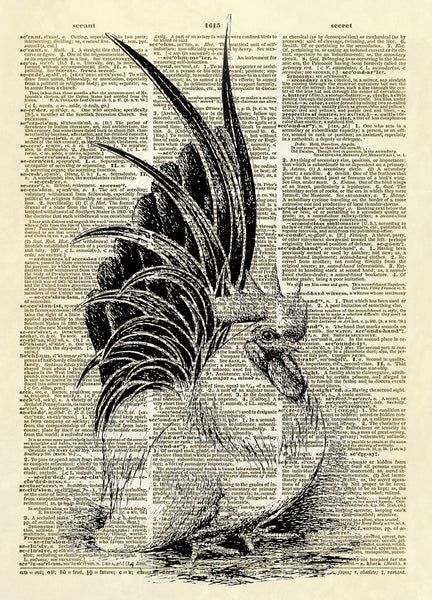 Roosting Chicken Hen Dictionary Art Print
