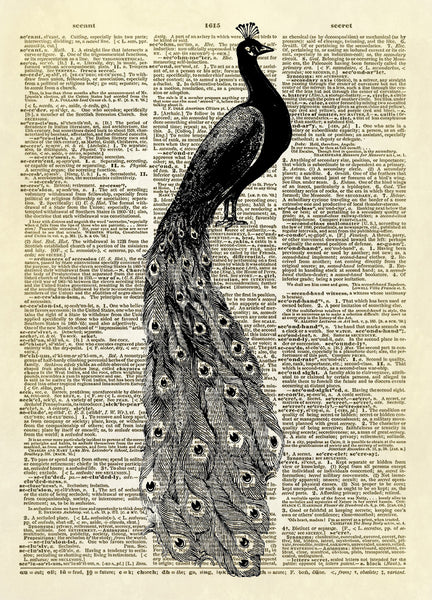 Peacock Bird Dictionary Art Print