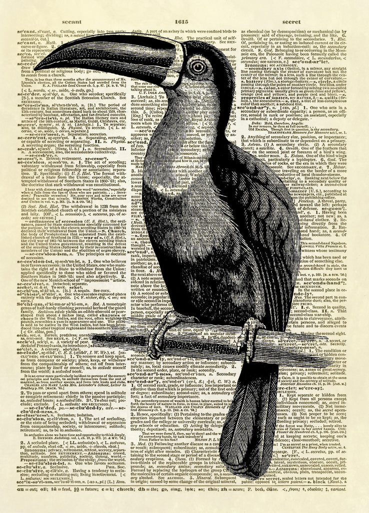 Toucan Bird Floating Dictionary Art Print