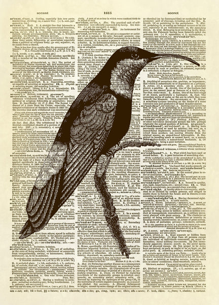 Curved Beak Hummingbird Dictionary Art Print