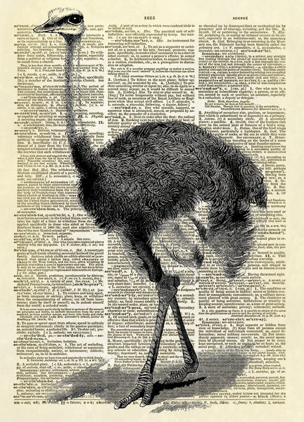 Ostrich Dictionary Art Print