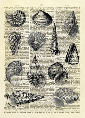 A Dozen Seashells Dictionary Art Print