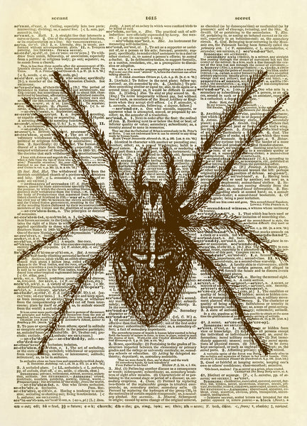 Furry Spider Dictionary Art Print