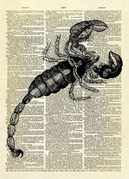 Scorpion Dictionary Art Print