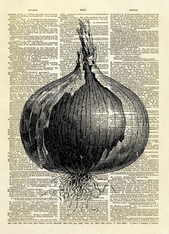 Onion Bulb Root Vegetable Dictionary Art Print
