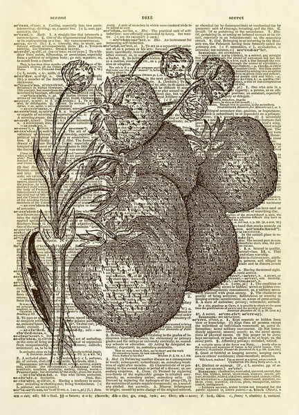Strawberries on the Vine Dictionary Art Print
