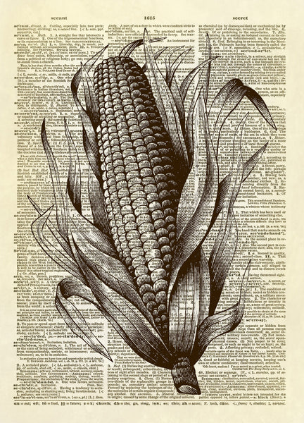 Ear of Corn Dictionary Art Print