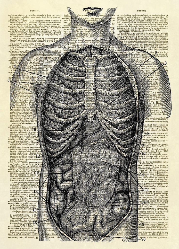Internal Human Anatomy Dictionary Art Print